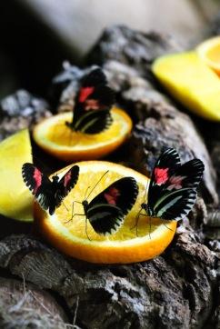 Butterfly Lunch