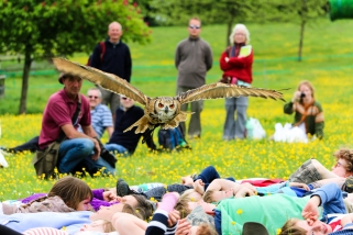 Watercress Festival @ Alresford - Local falconers displaying the extraordinary abilities of their birds