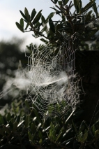 Intricate Spiders Web