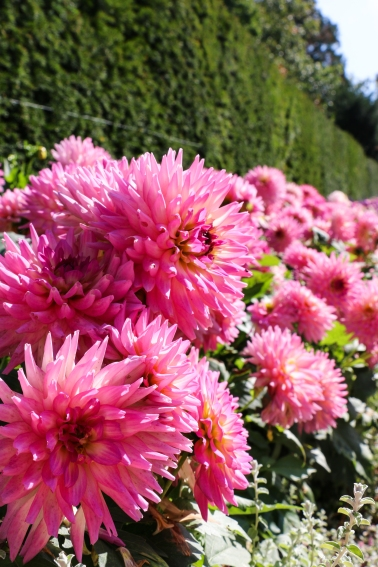 Day out @ Beaulieu - Beautiful flowers throughout the grounds of the Motor Museum